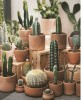Cactus Decorating Plants Can Last Most of The Time Without Water and How to Care for The Cactus to Survive